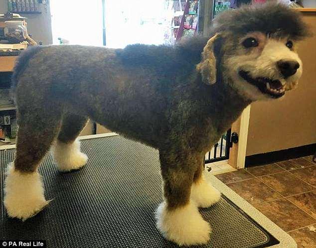 Μια 33χρονη υποστηρίζει οτι ο σκύλος της λατρεύει να του βάφουν το τρίχωμα
