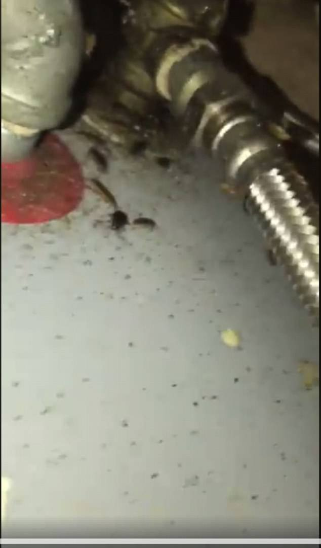 Κατσαρίδα τρύπωσε στο αυτί 25χρονου ενώ αυτός κοιμόταν