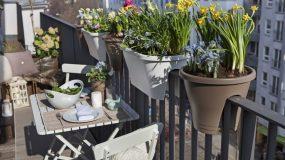 9+1 Φυτά που αντέχουν τη ζέστη για το Καλοκαιρινό Μπαλκόνι σου!