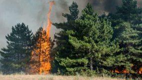 Το δέντρο που σε κατοικημένη περιοχή είναι βόμβα έτοιμη να εκραγεί