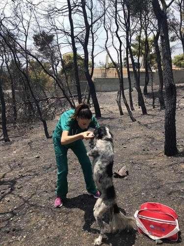Ελληνίδα κτηνίατρος σώζει αθώες τετράποδες ψυχές μέσα στις καμένες εκτάσεις