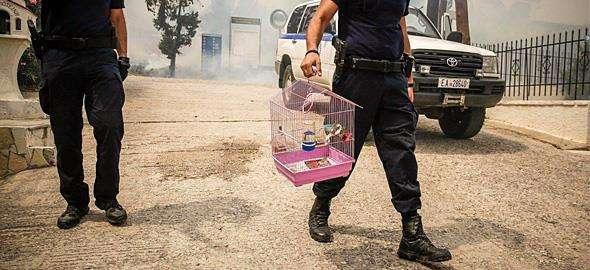 Πώς να βοηθήσετε τα πληγωμένα από τις πυρκαγιές ζώα