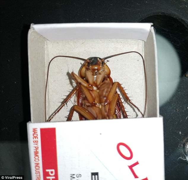 Ένας αντρας σκότωσε κατσαρίδα σε μίνι ηλεκτρική καρέκλα και προκάλεσε οργή