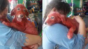 Το κουτάβι που έβαψαν με κόκκινη μπογιά σε όλο του το σώμα στη Χαλκίδα έχει πλέον το δικό του σπίτι