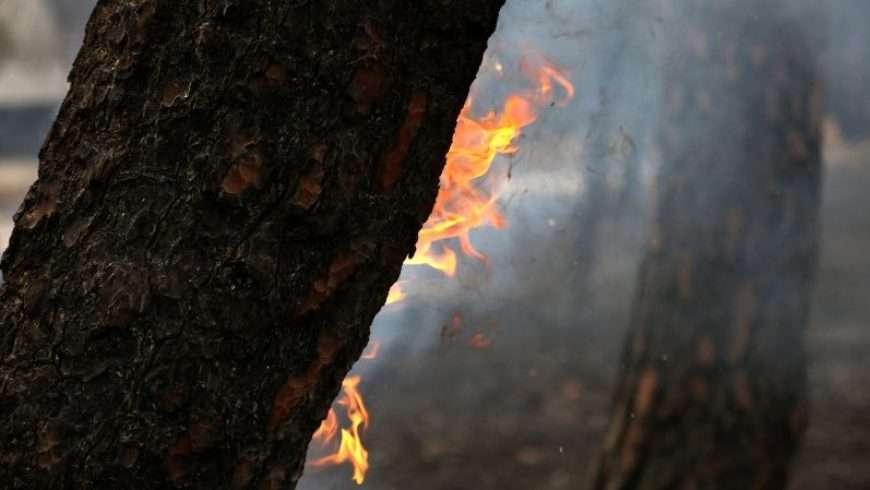 Τι να Κάνεις (και τι να Μην Κάνεις) την Ώρα της Πυρκαγιάς