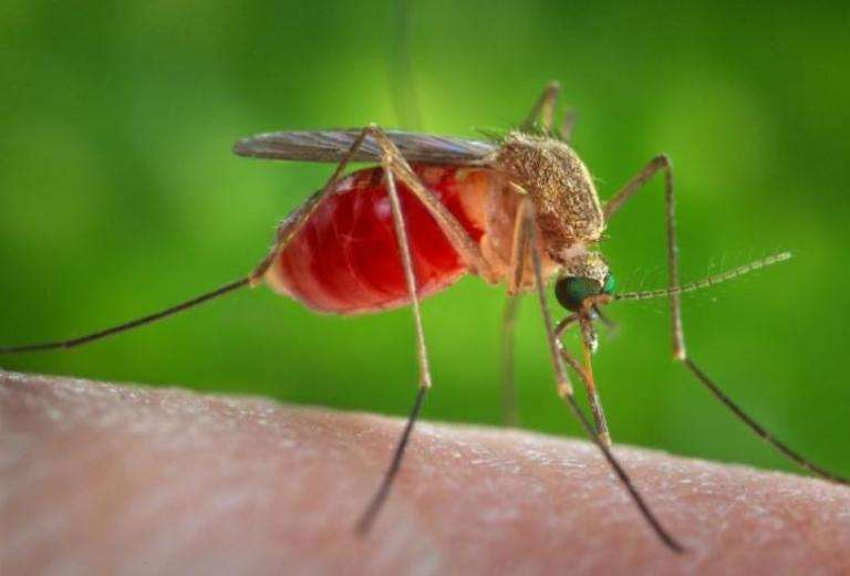 Προσοχή! Κόκκινος Συναγερμός σε 25 Δήμους. Μολυσμένα κουνούπια μεταδίδουν τον Ιό του Δυτικού Νείλου. Δείτε τη λίστα