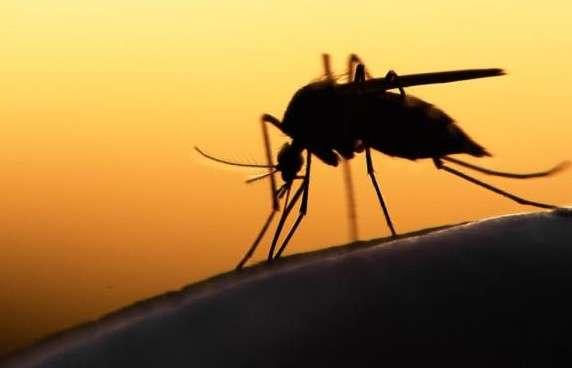 Κι όμως τα κουνούπια «αγαπούν» συγκεκριμένα χρώματα – Γιατί προτιμούν όσους φορούν μαύρα, μπλε και κόκκινα ρούχα;
