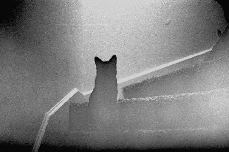 Μπορούν τα ζώα να νιώσουν τον Θάνατο; Οι υπερφυσικές αισθήσεις τους..