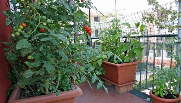 Αυτά είναι τα λαχανικά που μπορείτε να φυτέψετε το φθινόπωρο στον κήπο ή το μπαλκόνι σας