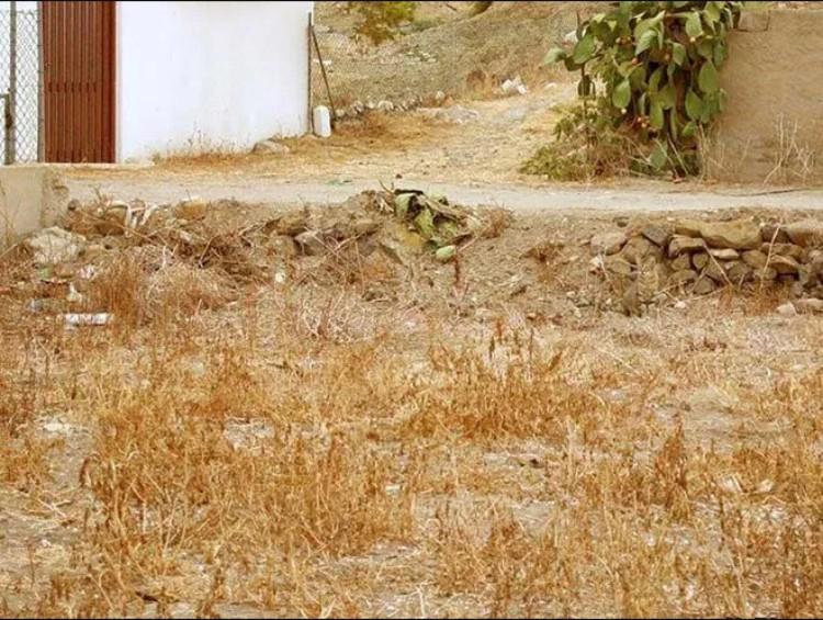Μπορείς να βρεις την Γάτα της Εικόνας σε λιγότερο από 30 Δευτερόλεπτα; Μόνο το 5% τα Κατάφερε!