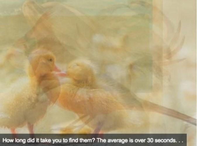 Ψυχολογικό τεστ: Ποιό ζώο είδατε πρώτο στην φωτογραφία; Δείτε τι σημαίνει για εσάς