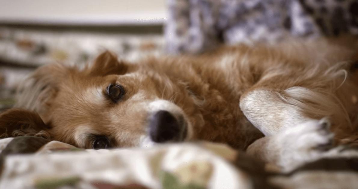 Γνωρίζετε γιατί ένας σκύλος δεν φεύγει ποτέ από το πλευρό του ιδιοκτήτη του ακόμη και μετά το θάνατο του;