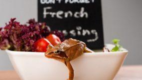 Βάτραχοι σε σαλάτες: Πώς μπαίνουν (και πώς επιβιώνουν)