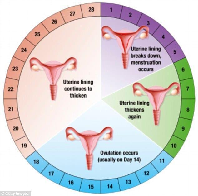 Γυναίκες Μεγάλη Προσοχή! Δείτε ΤΙ πρέπει να τρώτε στον Κύκλο της Περιόδου σας