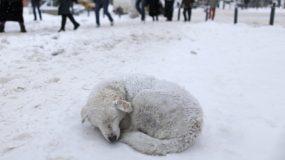 Έκκληση για τα αδέσποτα ζώα στον παγετό – Αφήστε τους έστω και λίγη τροφή