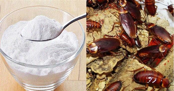 Κατσαρίδες τέλος με φυσικό τρόπο μόνο με 2 υλικά!