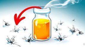 Πείτε τέλος στα κουνούπια με φυσικά αρώματα εύκολα και γρήγορα!