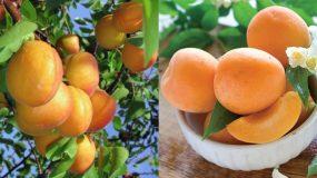 Το καλοκαιρινό φρούτο που βοηθάει στο αδυνάτισμα, την αναιμία και την αντιμετώπιση του καρκίνου!