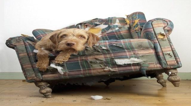 Σκύλος στο σπίτι; Μην απελπίζεστε και δείτε πως θα παραμείνει το σπίτι καθαρό πανεύκολα!