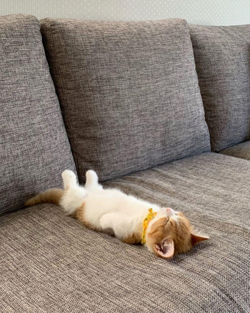 Θα πάθετε πλάκα! Δείτε τον μοναδικό γάτο που κοιμάται σαν άνθρωπος!