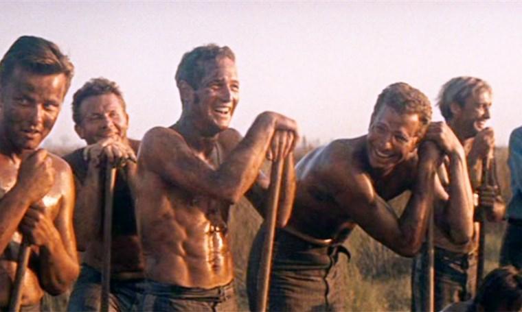 Paul Newman_