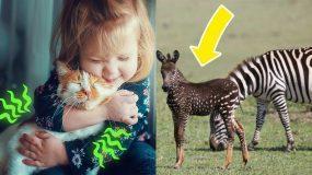 Γιατί οι γάτες γουργουρίζουν κι άλλες 11 ερωτήσεις που επιτέλους βρήκαμε τις απαντήσεις τους!