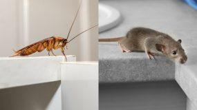 Πως να απαλλαγείτε από τις κατσαρίδες και άλλα 9 είδη παρασίτων στο σπίτι!