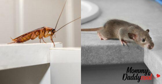 Πως να απαλλαγείτε από κατσαρίδες & άλλα 9 είδη παρασίτων