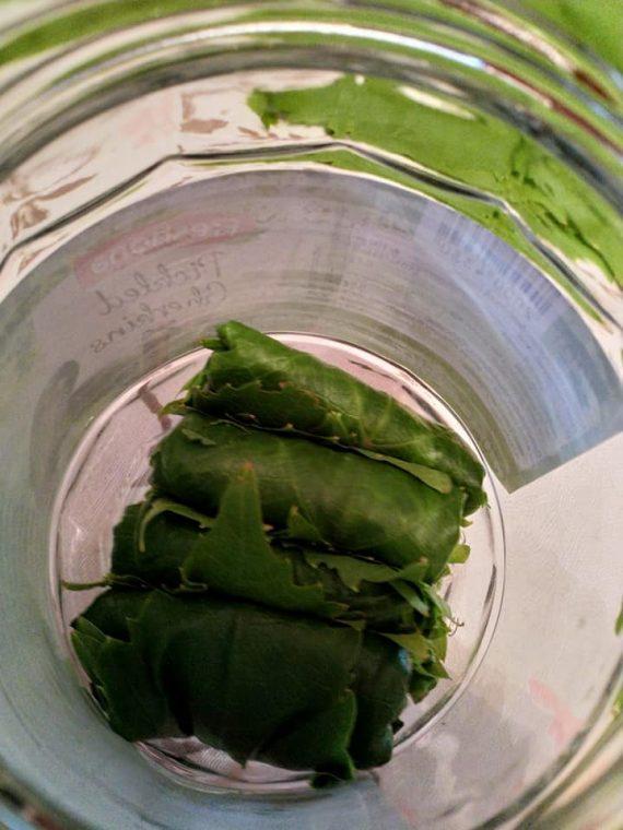 Πως να αποθηκεύσετε αμπελλόφυλλα σε βάζο χωρίς βράσιμο- Κονσερβοποίηση αμπελόφυλλων