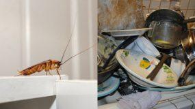 Οι τρεις λόγοι που έχεις κατσαρίδες στη κουζίνα σου και πως να τις ξεφορτωθείς