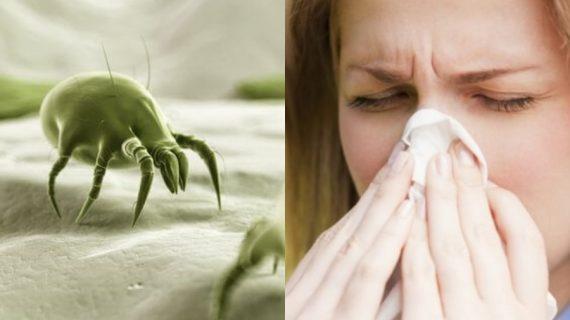 Ακάρεα σκόνης: Ποια προβλήματα υγείας προκαλούν πως μπορούμε να τα εξουδετερώσουμε;