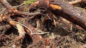 Εύβοια: Εφτά οι νεκροί μέχρι τωρα