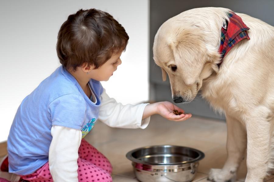 Σκύλοι & Γάτες: Από ποιο δάγκωμα είναι πιο πιθανό να μολυνθεί ένα παιδί; Παιδίατρος εξηγεί
