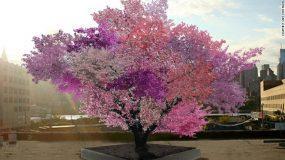 Απίστευτο: Υπάρχει δέντρο που παράγει 40 διαφορετικούς καρπούς! (βίντεο)