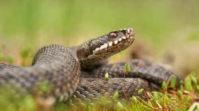 Η φρικιαστική στιγμή που γιατροί βγάζουν από το στόμα ασθενούς ένα φίδι