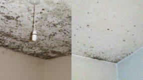 Πως να εξαφανίσετε την μούχλα στο ταβάνι και πως να την προλάβετε πριν εμφανιστεί!
