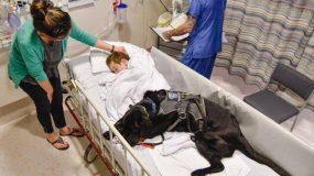 Δακρύσαμε από συγκίνηση: Το Λαμπραντόρ που δεν εγκαταλείπει το παιδί με αυτισμό ούτε στο νοσοκομείο! (φωτό)