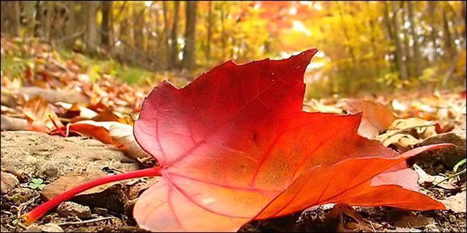 Από σήμερα ξεκινάει και επίσημα το φθινόπωρο