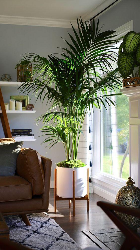 Οι τάσεις που θα κυριαρχήσουν στην διακόσμηση το 2021: Φυτά εσωτερικού χώρου στο γραφείο ιδέες