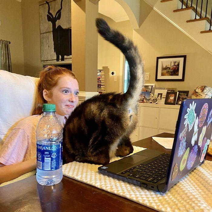 11 φωτογραφίες παιδιών που έκαναν εξ αποστάσεως διδασκαλία: γάτα μπήκε στην κάμερα την στιγμή που κοριτσάκι έκανε μαθήματα εξ' αποστάσεως