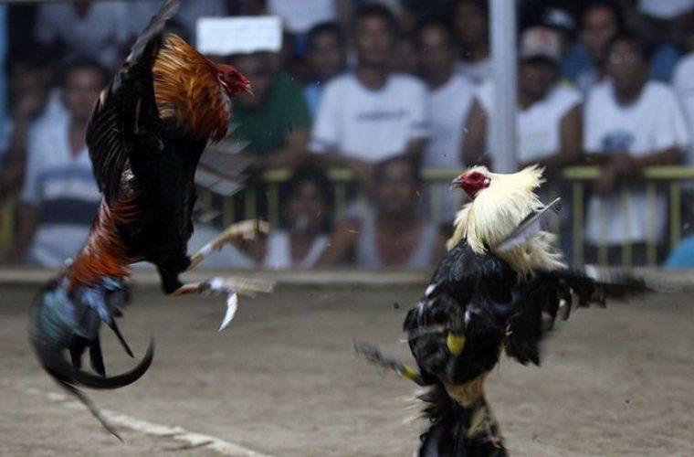 Αδιανόητο: Κόκορας σκότωσε αστυνομικό