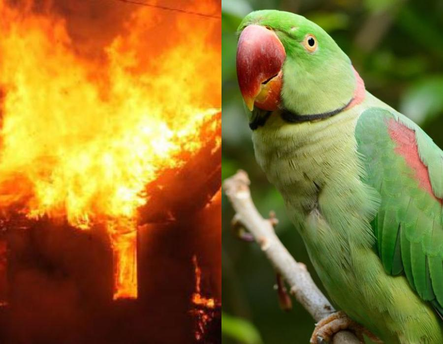 Φοβερό : Παπαγάλος σώζει τον ιδιοκτήτη του από την φωτιά του σπιτιού του