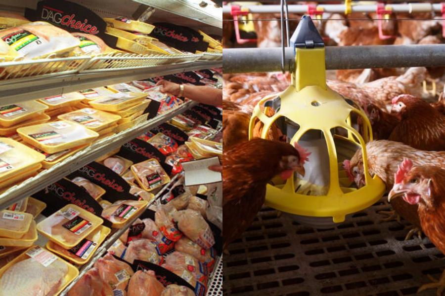 Φτηνά κοτόπουλα μπορεί να προκαλέσουν πανδημία χειρότερη του κορονοϊού