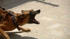 Σε σοβαρή κατάσταση 2χρονή  που δέχτηκε επίθεση από σκύλο
