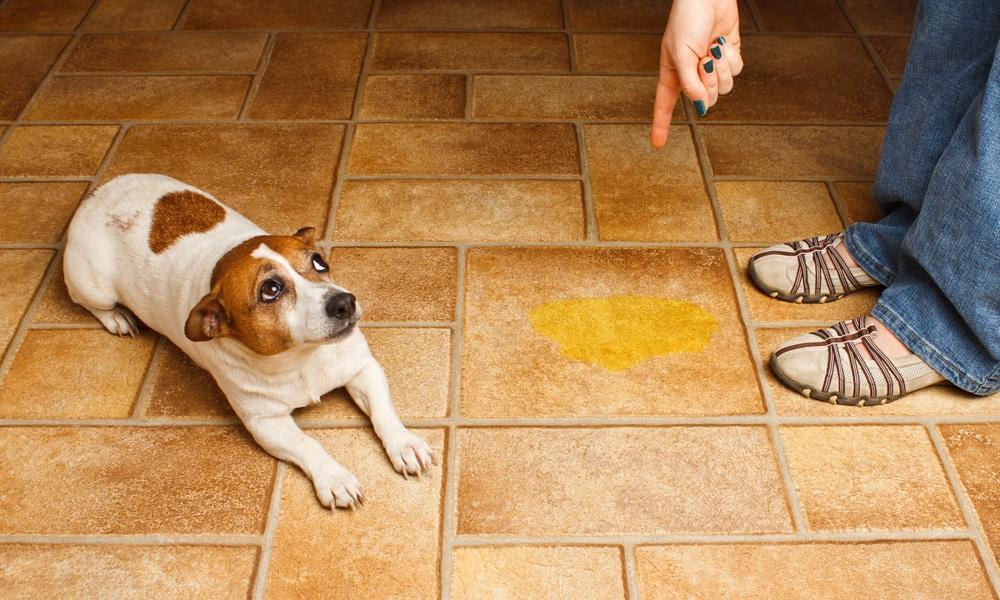 μαθαίνουμε το ζώο μας να μην μαρκάρει το σπίτι με vicks