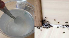 Το λευκό ξύδι χρειάζεται σε κάθε σπίτι: Δείτε 15+1 clean tips που θα σας σώσουν