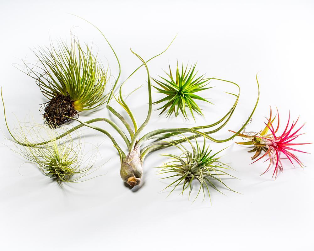 Φυτά που δεν θέλουν πότισμα