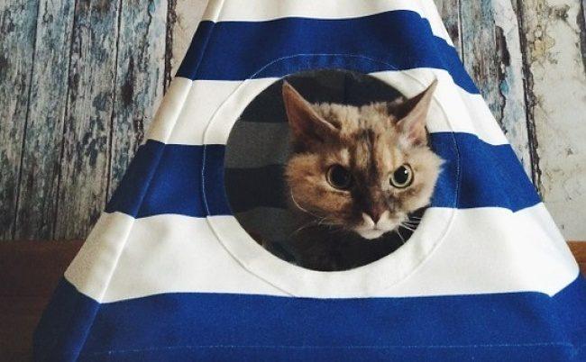 γάτα_σε_σπίτι_ Ενοικίαση σπιτιού_Όλα όσα πρέπει να_ γνωρίζεις_