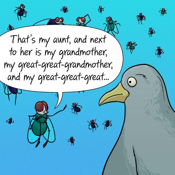 υπάρχουν_πολλά_είδη_μύγας_