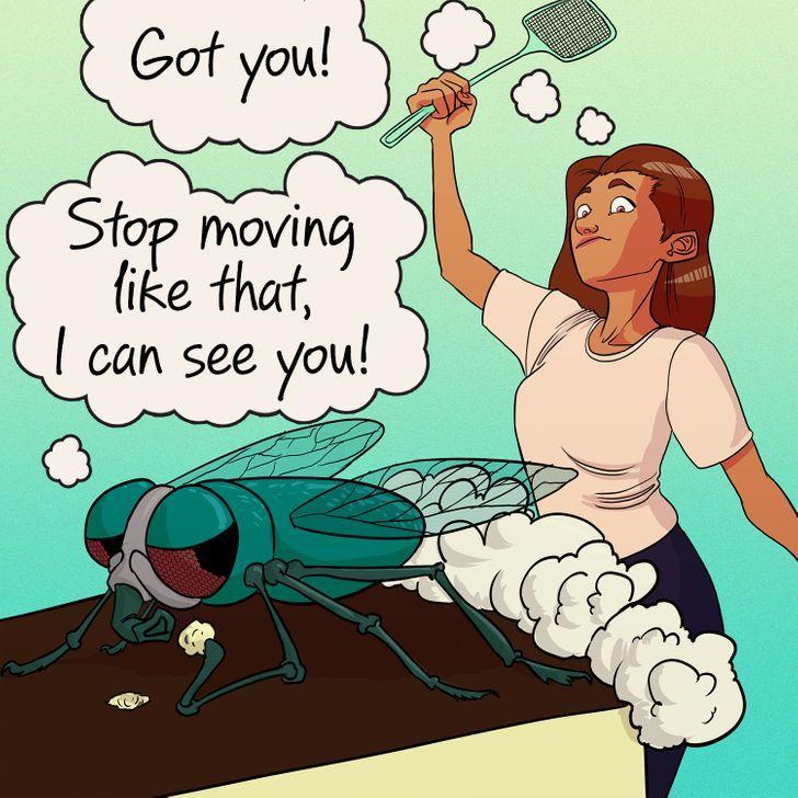 οι_μύγες_μπορούν_να_δουν_προς_όλες_τις_κατευθύνσεις_